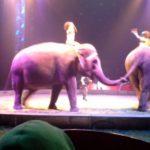 circus-9-530x317